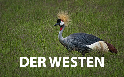 Nationalparks im Westen Kenias