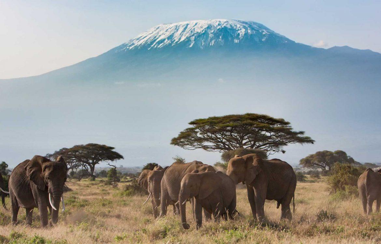 Tierwelt in Kenia